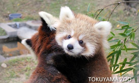 徳山動物園の夏バテした動物たち