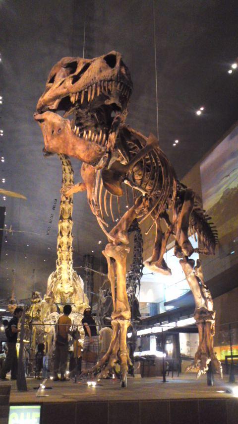 恐竜見てきました。