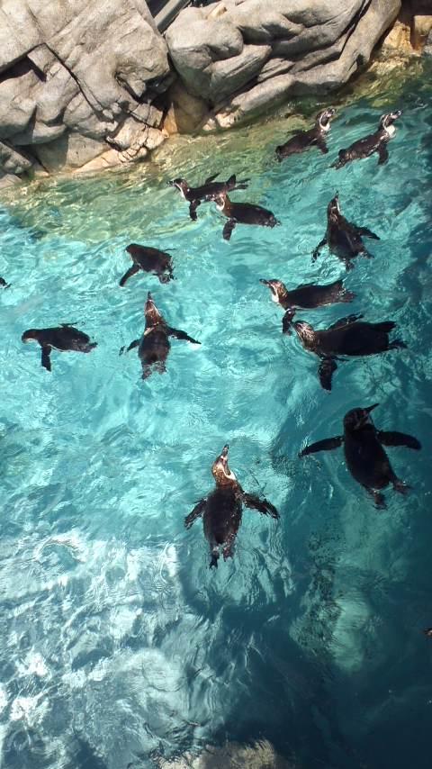 素敵な水族館