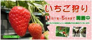 top_right_1411_ichigo