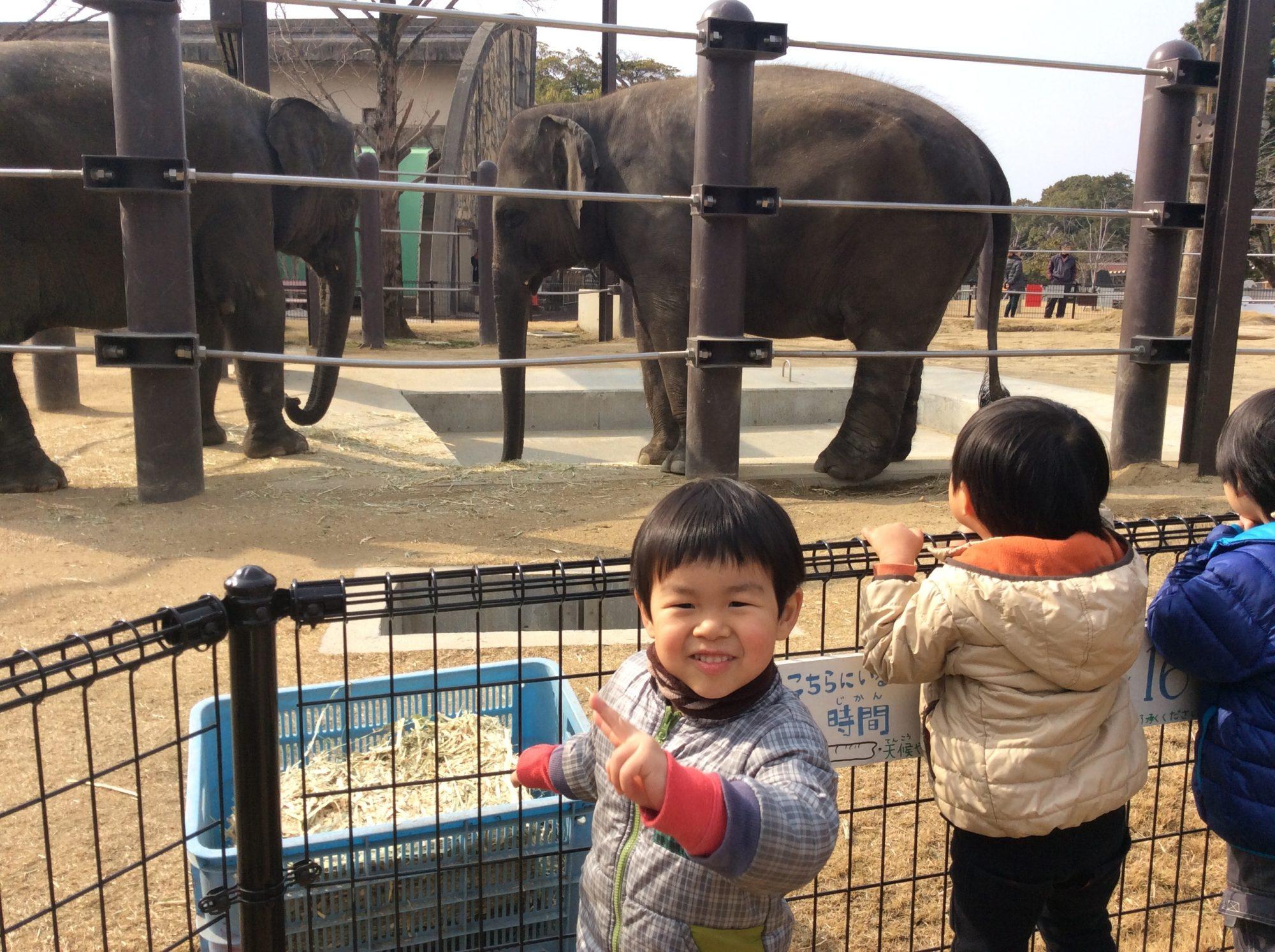 ちょっとやる気のない動物園