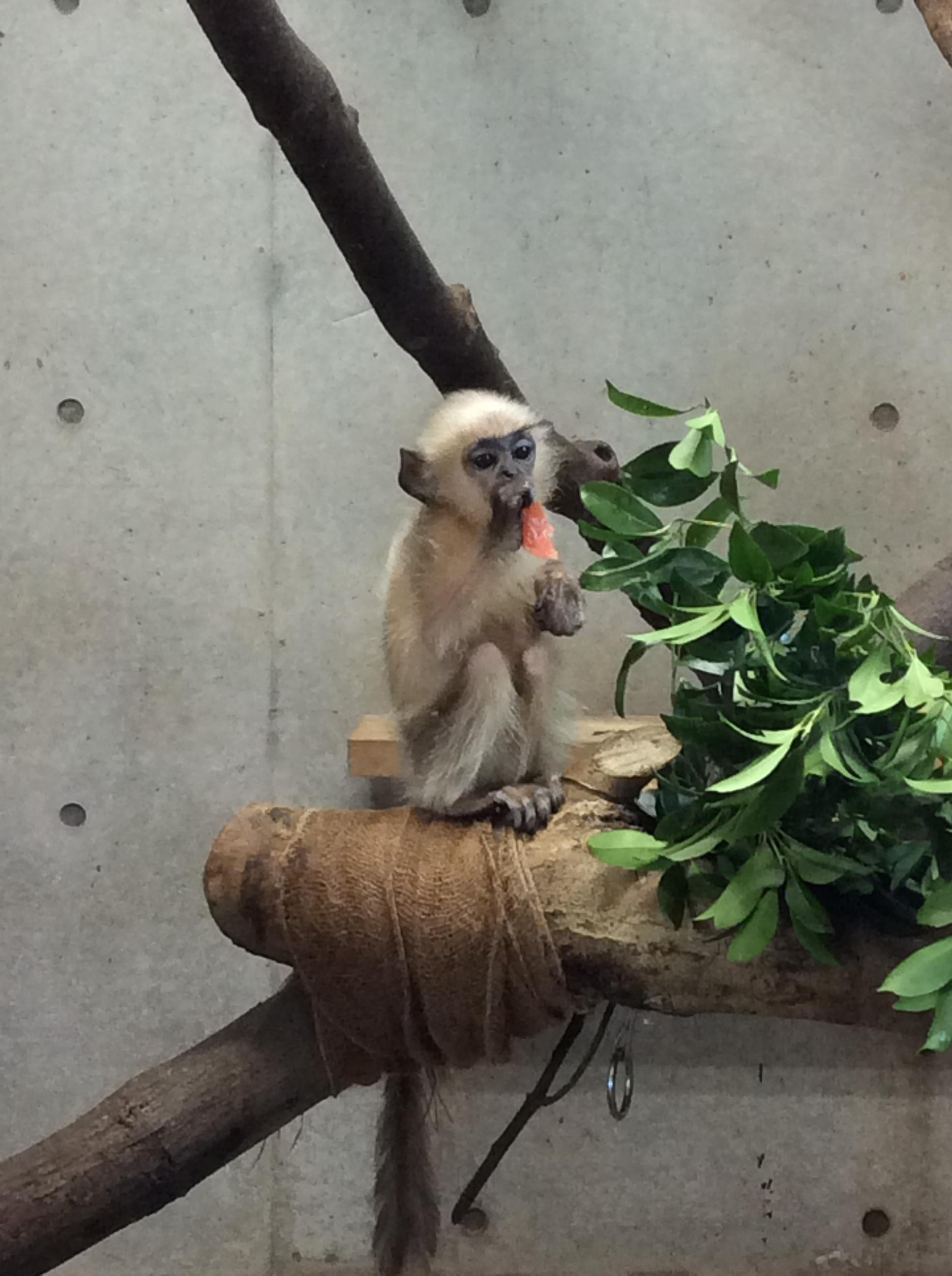 猿も木から落ちる?!