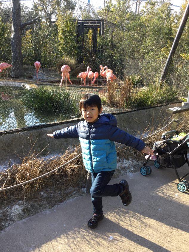 ときわ動物園で「ブンバボーン!」