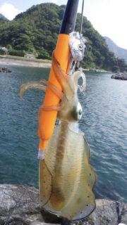 海老で鯛を釣る(イカ編)